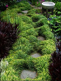Nz Grasses For Landscaping Ace mondo suppliers of mondo grasses and liriopes mondo grass workwithnaturefo